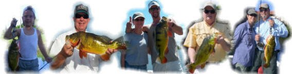 Peacock bass enthusiasts, fishing trips for the hard fighting Peacock bass!
