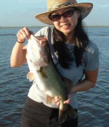 Beautiful Florida Large mouth Bass!